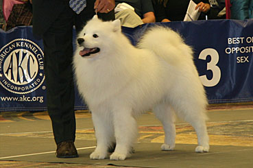 Best of Breed Dogs